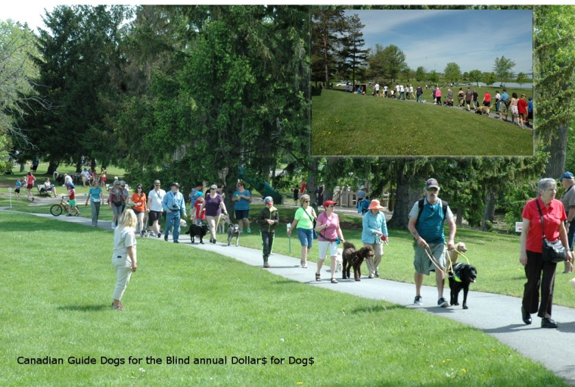 may-17-2018_WE_walkers-in-the-park_collage